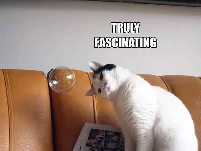 cat-moment-1