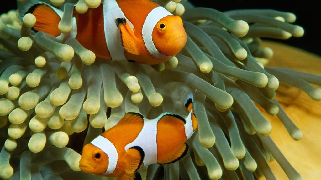 do-fish-have-feelings