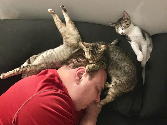 man sleeping with cats